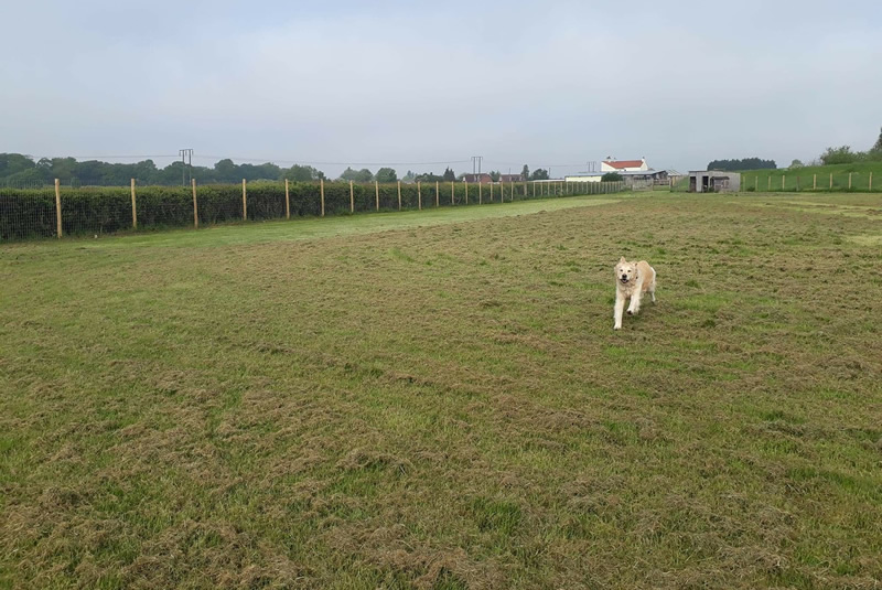 Muttlins Outdoor Exercise Paddock